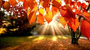 autumn-sunshine-image